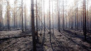 Une forêt ravagée par un incendie près d'Angra, en Suède, le 22 juillet 2018. (MATS ANDERSSON / TT NEWS AGENCY / AFP)