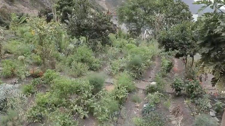 France 2 poursuit son voyage au Cap-Vert, un archipel au large du Sénégal qui attire de plus en plus de touristes. Sur place, les locaux veillent à ce que la nature reste préservée. (France 2)