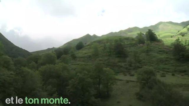 Malgré les réticences des éleveurs et des chasseurs de la région, deux ourses ont été relâchées dans les Pyrénées-Atlantique.
