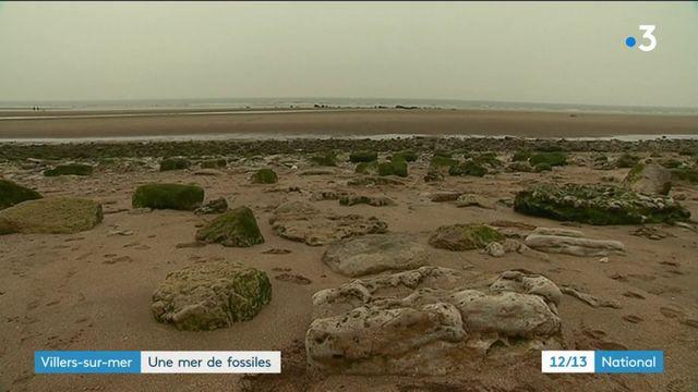 Villers-sur-Mer : à la découverte d'un site riche en fossiles