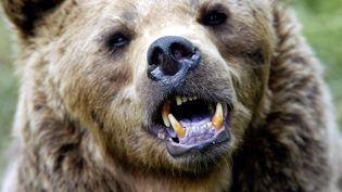Une ourse du parc animalier des Angles. (GEORGES GOBET / AFP)