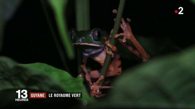 Feuilleton : Guyane, le royaume vert (1/5)