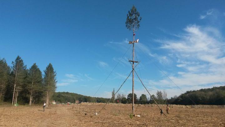 """Cet arbre a été """"planté"""" par les opposants au barrage de Sivens (Tarn), au milieu de la zone dédiée au projet. (FABIEN MAGNENOU / FRANCETV INFO)"""