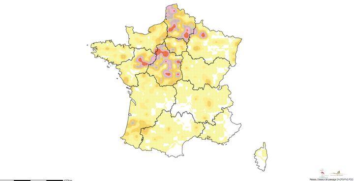 Carte d'abondance des populations de faisans communs en France métropolitaine établie par l'ONCFS. (ONCFS)