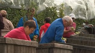 Face au manque de main d'œuvre pour la cueillette des pommes dans les Deux-Sèvres, les arboriculteurs emploient des jeunes retraités. (FRANCE 3)