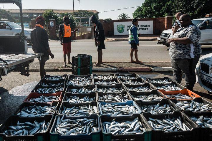La pêche à la sardine permet de gagner un peu d'argent. Les poissons sont vendus directement aux habitants près de la plage, comme ici à Warner each, au sud de Durban, le 20 juin 2021. (RAJESH JANTILAL / AFP)