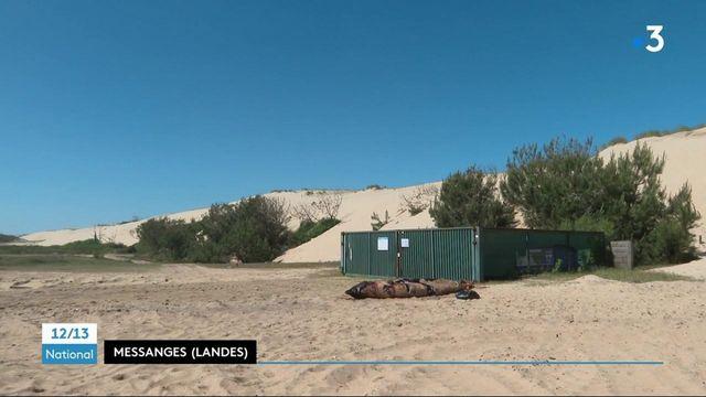 Landes : une baleine ingurgite 16 kilos de plastique et s'échoue