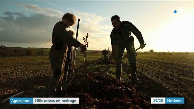 Mayenne : pourquoi cet agriculteur a choisit de replanter 1 000 arbres avant de partir en retraite