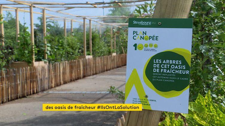 Un des oasis de fraîcheur installés à Strasbourg dans le cadre du Plan Canopée. (France 3 Strasbourg)