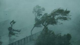 Des arbres sont aux prises avec de violentes bourrasques de vent sur la côte de Hong-Kong, le 16 septembre 2018. (WANG SHEN / AFP)