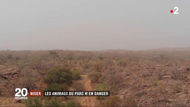 Niger : les animaux du parc W en danger