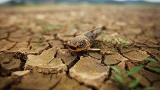 Quelque 6% des insectes, 8% des plantes et 4% des animaux vertébrés perdraient la moitié de leur habitat en cas de hausse d'1,5°C des températures. (JNDSB / IMAGINECHINA / AFP)