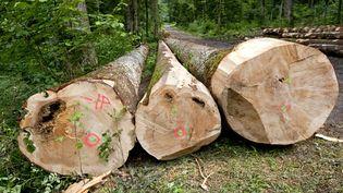 Des arbres abattus dans la forêt de la Joux, à Supt (Jura), le 25 avril 2018. (PHILIPPE ROY / AFP)