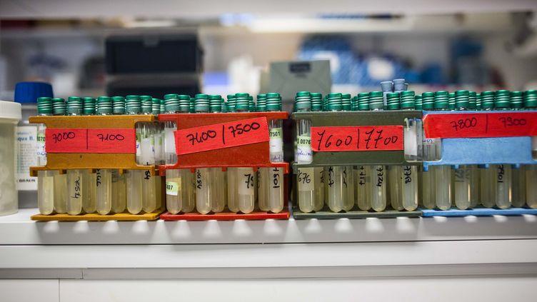Des tubes à essai contenant des bactéries pahtogènes, dans un laboratoire de l'institut Pasteur, à Paris, le 18 novembre 2011. (  MAXPPP)