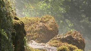 En Isère il existe un jardin magique où des cascades d'eau ont l'étonnant pouvoir de pétrifier les plantes et les fleurs. (CAPTURE D'ÉCRAN FRANCE 2)
