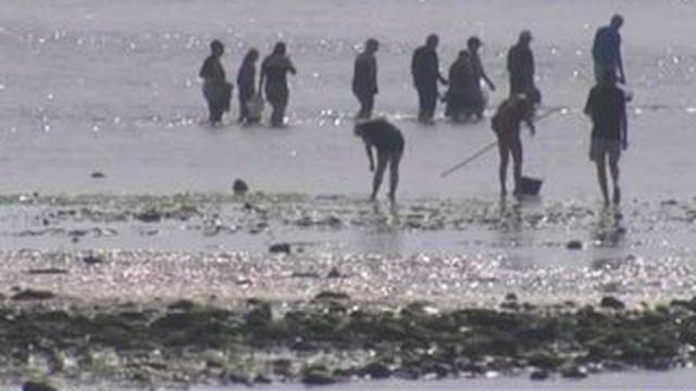 Île de Ré : l'heure de la pêche à pied a sonné !