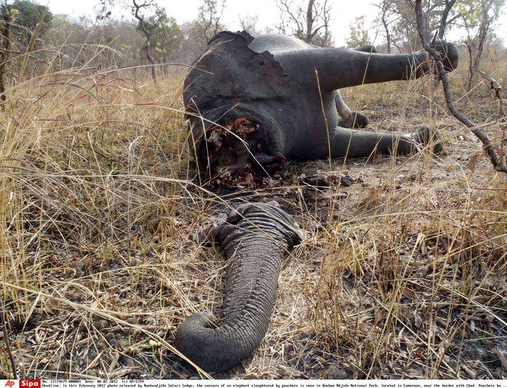 La carcasse d'un éléphantdans le parc national de Boubandjida, dans le nord-est du Cameroun, le 16 février 2012. (AP / SIPA / AP)