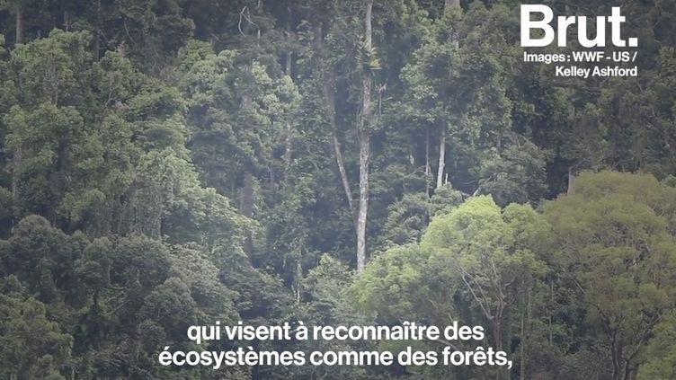 """VIDEO. """"On leur reconnaît des droits à vivre, à se régénérer, à prospérer"""" : Il veut faire reconnaître les droits de la nature (BRUT)"""