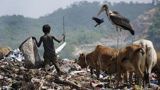 Un enfantfait du recyclage à Guwahati en Inde, le 4 juin 2014. (Photo d'illustration) (BIJU BORO / AFP)
