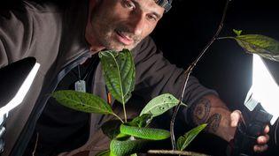 Frank Deschandol photographie un serpent (France 3 Baie de Seine)