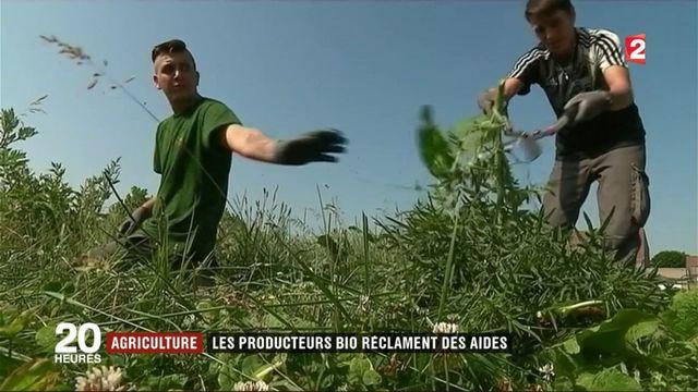 Agriculture : les producteurs bio réclament des aides