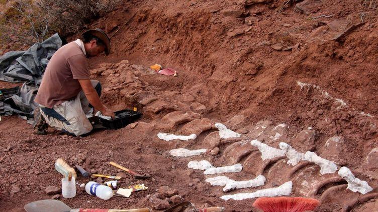 Un paléontologue met à jour le fossile d'un dinosaure àNeuquen (Argentine), en avril 2015. (JOSE LUIS CARBALLIDO / CTYS-UNLAM / AFP)