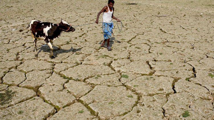 Un fermier tire une vache sur une terre touchée par la sécheresse à Tripura (Inde), le 24 février 2018. (ARINDAM DEY / AFP)