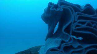 Des récifs artificiels ont été installés le long du littoral méditerranéen français. Un moyen de protéger la biodiversité au large des stations balnéaires, comme ce fût le cas au Cap d'Agde (Hérault). (FRANCE 2)