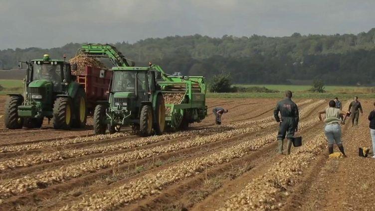 En Normandie, des maraîchers s'organisent pour que plus rien ne se perde dans les champs. (CAPTURE ECRAN FRANCE 2)