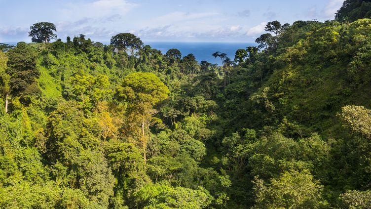 Sur l'île volcanique de Bioko en Guinée équatoriale, la forêt humide recèle des bois rares très convoités (photo du 3 novembre 2017). (MICHAEL RUNKEL / ROBERT HARDING PREMIUM)