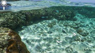 Le servicepropose, à partir du mercredi 26 septembre, de plonger virtuellement pour observer plusieurs sites sous-marins remarquables. (CAPTURE D'ECRAN GOOGLE / FTVI)