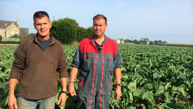 Jean-François et Gilbert Salaun,légumiers à Cléder,dans le Finistère, mardi 23 septembre 2014. (CAROLE BELINGARD / FRANCETV INFO )