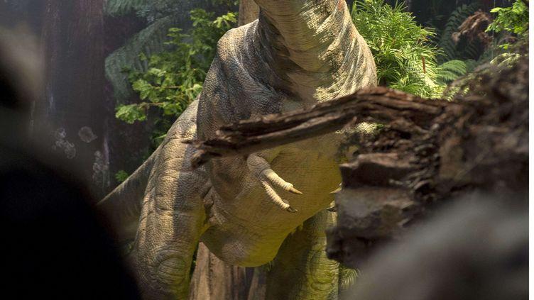 Un dinosaure représenté dans une exposition à Cornwall (Royaume-Uni), le 21 juillet 2014. (VAUGHAN PICKHAVER / REX / SIPA)