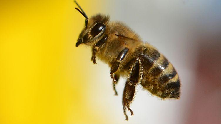 Une abeille, à Francfort (Allemagne), le 11 mars 2015. (ARNE DEDERT / DPA / AFP)