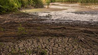 La sécheresse d'une rivière àGhentbrugge (Belgique), le 3 juin 2020. (JONATHAN RAA / NURPHOTO / AFP)