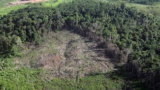 Déforestation au nord du Brésil (Antonia Scorza/ AFP)