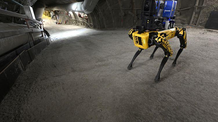 Le robot chien SCAR, développé par l'école des Mines de Nancy, photographié ci-contre dans le laboratoire souterrain de l'Andra, à Bure, dans la Meuse, le 11 mai 2021. (JEAN CHRISTOPHE VERHAEGEN / AFP)
