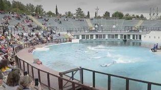 Parc Astérix : les visiteurs doivent dire adieu aux dauphins et aux otaries (FRANCE 2)
