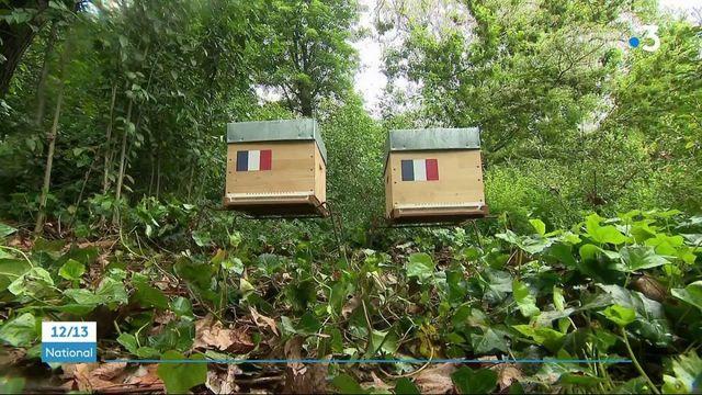 Apiculture : deux ruches d'abeilles normandes installées dans les jardins de l'Élysée