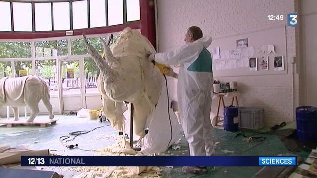 """Entre sculpture et taxidermie à la """"rhinoweek"""" du Havre"""