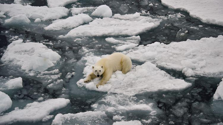 Un ours polairedans la baie d'Essen dansl'océan Arctique. (EKATERINA ANISIMOVA / AFP)