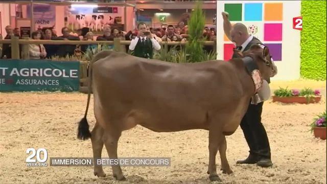 Salon de l'agriculture : l'incontournable concours général des animaux