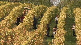 Vendanges : de notaire à viticulteur. (FRANCE 2)