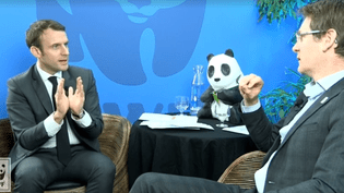 Capture d'écran de #PandaLive organisé par WWF avec Emmanuel Macron, le 9 février 2017 (WWF FRANCE)