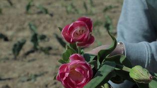 Tendance : fleurs, fruits et légumes… les cueillettes à faire soi-même ont du succès (France 3)