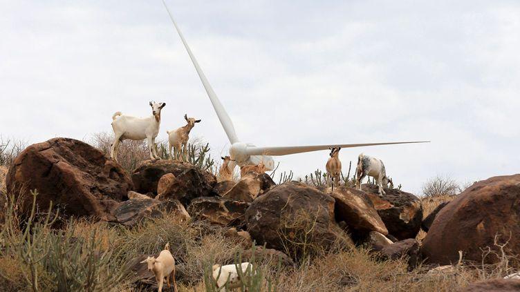 D'ici à la fin 2018, la centrale éolienne du lac de Turkana (nord-ouest), baptisée le «Lake Turkana Wind Power project» (LTWP) entrera en activité, foi de ministre. Celui de l'Energie Charles Keter a annoncé début septembre que les lignes d'acheminement de l'électricité sont enfin terminées et que le raccordement au réseau serait prêt dans trois mois. Depuis son lancement en 2015, le parc éolien kényan, présenté comme l'une des plus grandes fiertés du pays par le président Kenyatta, a multiplié les retards. Des ajournements qui ont engendré des amendes etun alourdissement important de la facture. L'accès à une électricité à coût modéré, promis par le pouvoir et attendu par près de la moitié des Kényans qui vivent sans lumière, risque de rester lettre morte. (Thomas MUKOYA / REUTERS)