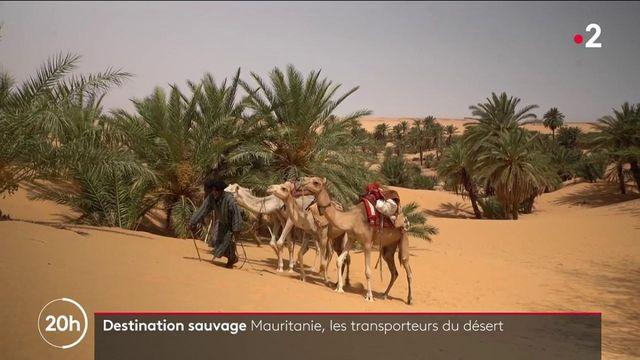 Mauritanie : à la découverte des transporteurs du désert