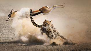 """Le léopard et l'impala dans un nuage de poussière, dans le documentaire réalisé parAlastair Fothergill, """"Prédateurs, la partie n'est jamais gagnée"""", diffusé sur France 5. (@Grégoire Bouguereau)"""