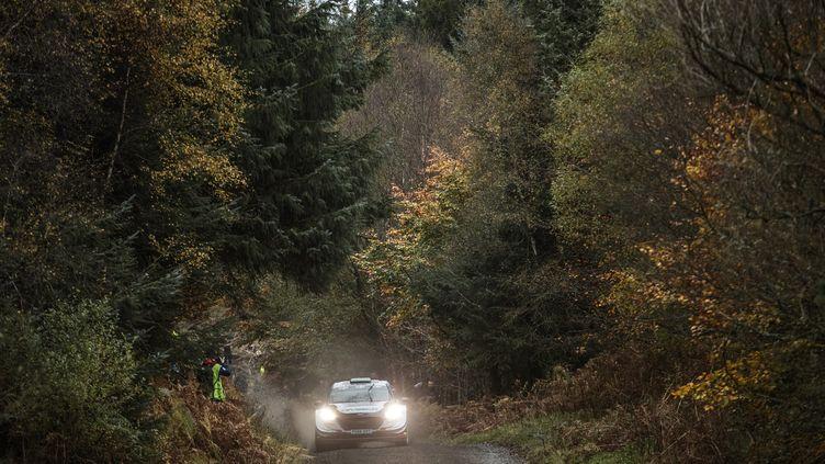 Elfyn Evans (M-Sport / Ford) dans la forêt galloise (FREDERIC LE FLOC H / DPPI MEDIA)