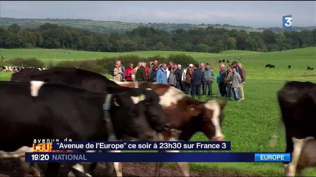 Irlande : le secret des éleveurs laitiers